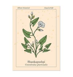 Shankapushpi convolvulus prostratus medicinal vector