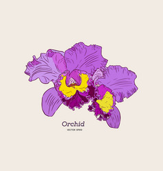 Violet and yellow orchid hand draw sketch vector