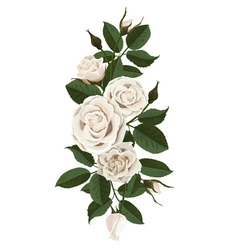 White roses flowers buds and leaves vector