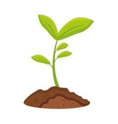 Plant flower woods vector