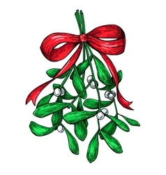 Mistletoe with red bow Christmas decor plant vector image