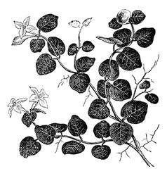 Mitchelle rampant vintage engraving vector image vector image