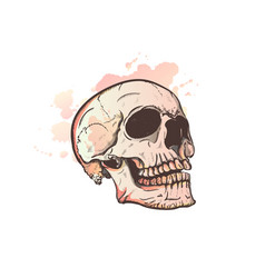skull and watercolor blots vector image