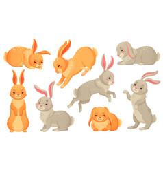 Cartoon bunny rabbits pets easter bunnies vector