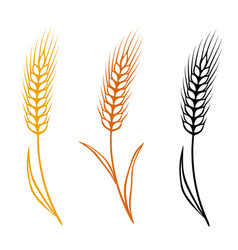 Colorful isolated wheat ears set vector