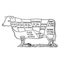 Cuts of beef vintage vector