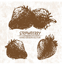 digital detailed strawberry hand drawn vector image