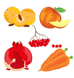 Fruits vegetables and berry vector