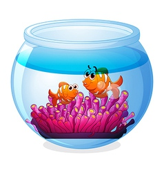 An aquarium with two orange fishes vector image vector image