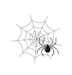 spider in the web isolated on white background vector image