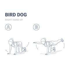 Bird dog woman home workout exercise guide vector