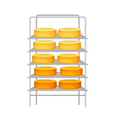Cheese wheels or head rested on metal rack vector