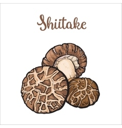 Set of shiitake edible mushrooms vector