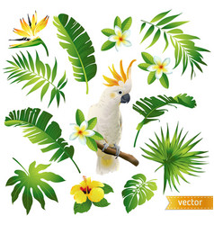 Set with tropical leaves flowers and bird vector
