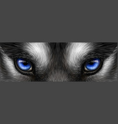 Siberian husky bright blue eyes close up vector