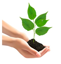 Human hands holding green tree with leaves vector image