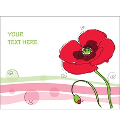 beautiful poppy flower vector image