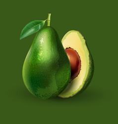 Avocado on green background vector