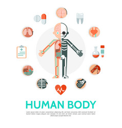 Flat human body anatomy round concept vector
