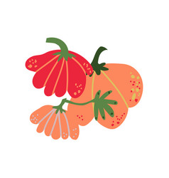 pumpkin fresh vegetable organic nutritious vector image