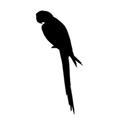 Silhouette macaw parrot sitting vector