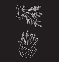 Two jellifishes hand drawn vector