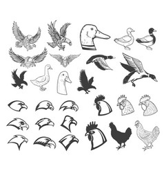 set of birds eagle duck goose chicken design vector image vector image