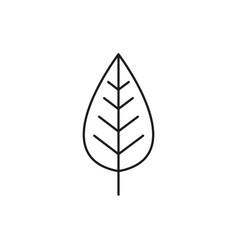 alder icon vector image