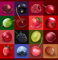 Collection of berries vector