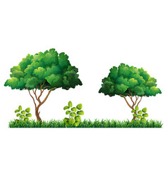 Nature tree on white background vector