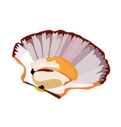 Scallop in shell icon isolated on white background vector