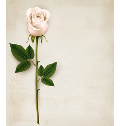 White rose on paper background vector