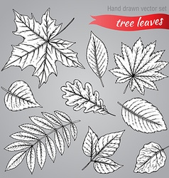 Botanical set highly detailed hand drawn leaves vector image