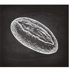 chalk sketch of loaf vector image vector image