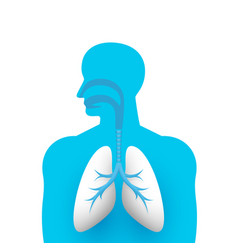 human lungs medical art creative vector image