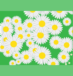 seamless pattern with chamomile on green vector image