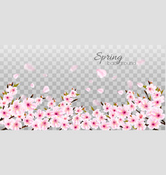 branches of a blossoming sakura on transparent vector image
