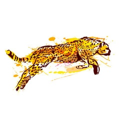 Colored hand sketch leaping jaguar vector image