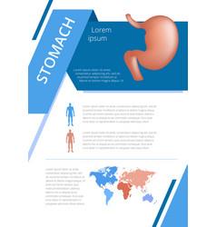 Internal human organs infographic stomach vector