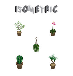 Isometric houseplant set of fern peyote grower vector