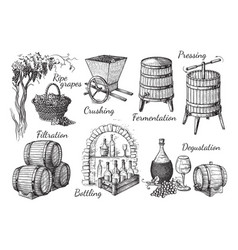 Process of wine production vector