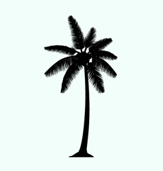 Realistic palm tree silhouette vector