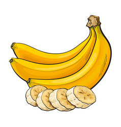 ripe banana bunch and slices sketch vector image