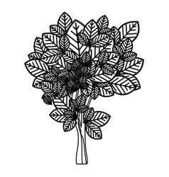 Sketch silhouette leafy tree with ramifications vector