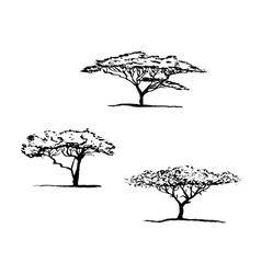 Acacia set vector