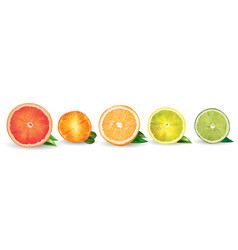 Orange lemon citrus mandarin grapefruit and vector