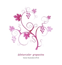 Watercolor style green grapevine vector image vector image