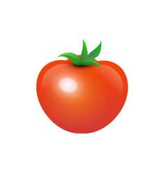 tasty juicy tomato vector image vector image