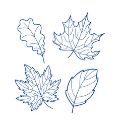 four linear leaves vector image