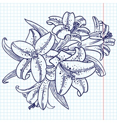 bouquet of lilies vector image